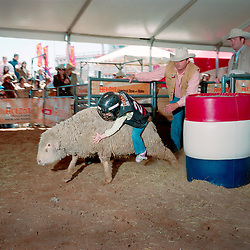 """Houston, Texas - March 2010- The """"Mutton Bustin"""" event, where children ride a sheep, competing to stay on the longest at the Houston Rodeo.   Photo by Susana Raab"""