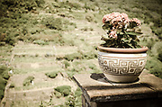 Flower pot and vineyards at Corniglia, Cinque Terre, Liguria, Italy