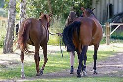 Kellinghusen - Reittunier 26. - 27.06.2021, Impression Pferde Impression