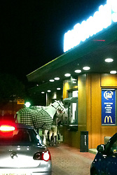 """©London News pictures...  Horses at Macdonalds restaurant. Around midnight, Tris Brown and friends pulled into the McDonalds drive-in in Aintree, near the famous racecourse, to discover two horses being served. It is understood their owner had been celebrating after a win at a showjumping event at Aintree that day, and had fallen out with his girlfriend. A crowd of onlookers grew as he led the horses away, while being chased by police officers who had arrived on the scene.  He also tried to mount one of the horses but failed.  Police vans managed to encircle the horses and detain the owner, while a horsebox supposedly owned by his partner arrived to transport the horses away. """"It was hilarious,"""" said bystander Tris Brown, who took the picture on his phone,  """"Not only did we see the once-in-a-lifetime vision of horses being served at McDonalds, but we also watched the owner try to run away from the police, while failing to get on his horse.  He should have had the perfect getaway, but instead it's a tale of whoaa!"""""""