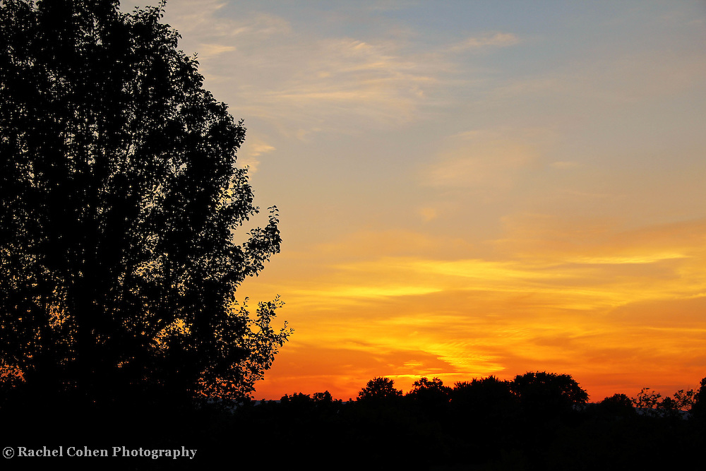 """""""Light a Fire""""<br /> <br /> Sunset and silhouette!<br /> <br /> Sunset Images by Rachel Cohen"""
