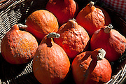 Fresh pumpkin, petit marron, on sale at food market at Sauveterre-de-Guyenne, Bordeaux, France