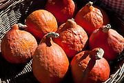 Fresh pumpkin, petit marron, on sale at food market at Sauveterre-de-Guyenne, Bordeaux, France