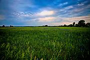 Biebrzańskie łąki, okolice Goniądza