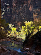 East Fork of the Virgin River in Zion National Park