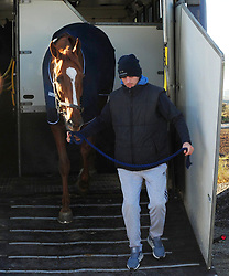 Samcro with his groom Jack Madden come off the Lorry to go the stable yard at Down Royal Racecourse.
