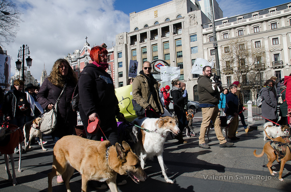 Madrid, Spain. 7th Feb, 2016. Demonstrators protesting with their dogs against hunting using greyhounds or other breeds.