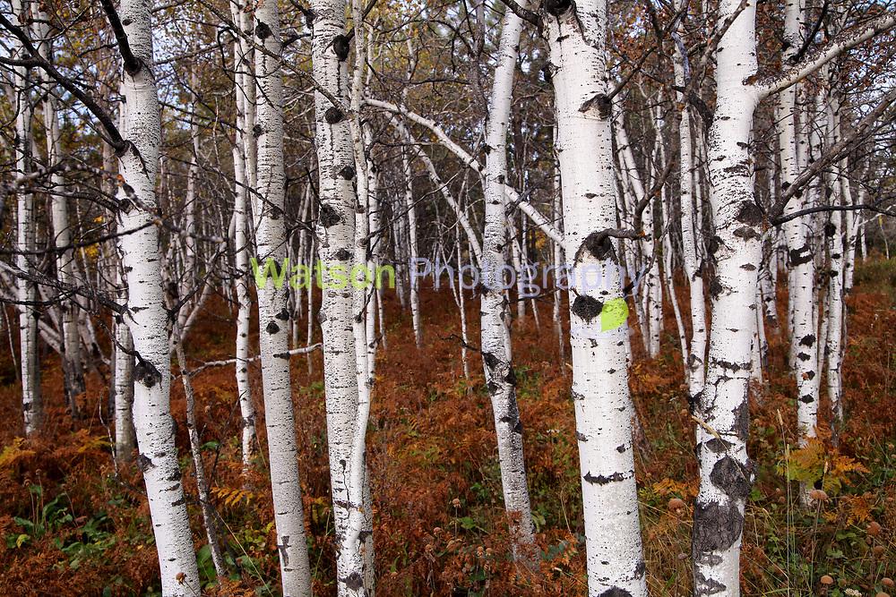 Autumn's Warm Enchanted Woodlands