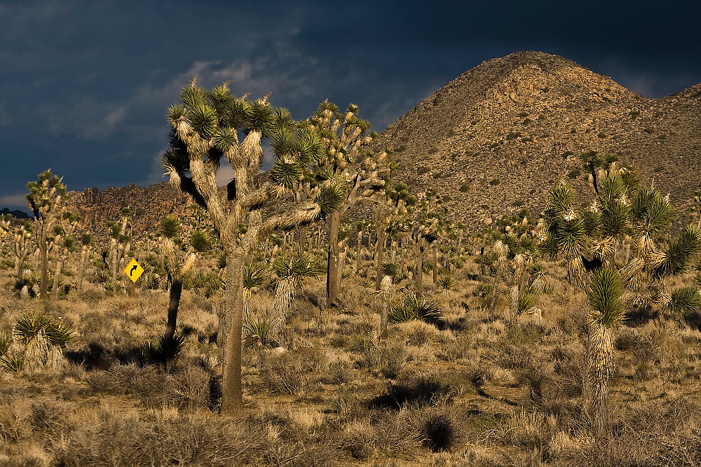 A curving road sign stands out against dark stormy skies in Joshua Tree National Park, California.