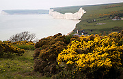 Seven Sisters chalk cliffs looking west from  Birling Gap, East Sussex England.