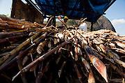 Ouro Verde de Minas_MG, Brasil.<br /> <br /> Engenho de cana de acucar em Ouro Verde de Minas, Minas Gerais.<br /> <br /> Plantation of sugar cane in Ouro Verde de Minas, Minas Gerais.<br /> <br /> Foto: LEO DRUMOND / NITRO