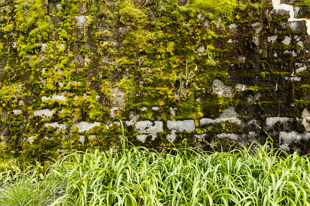 Moss and Ferns on Wall