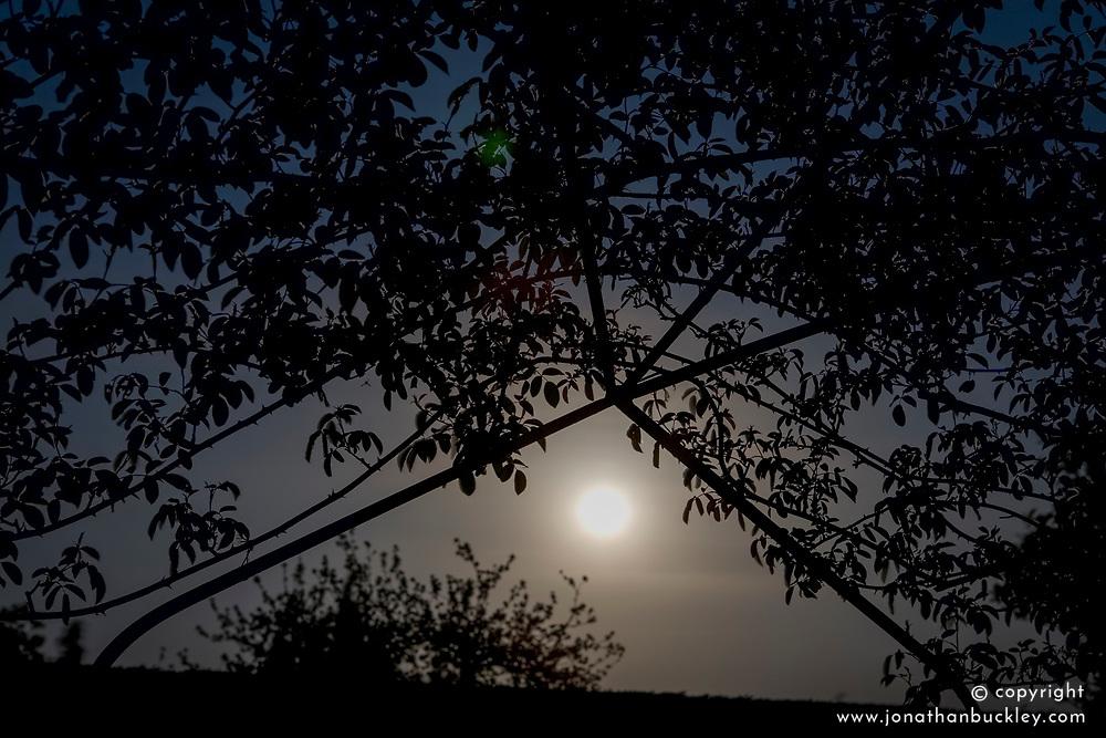 Moonlight in the White Garden at Sissinghurst Castle