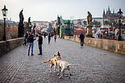 Playing dogs and people - some of them wearing face masks - while passing Charles Bridge in Prague. As of 21st of October 2020 people have to wear face masks outside and inside.