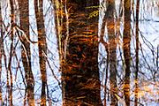 Gum Swamp, a karst-depression wetland
