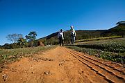 Sao Roque de Minas _ MG, Brasil...Serra da Canastra em Sao Roque de Minas, Minas Gerais...Serra da Canastra in Sao Roque de Minas, Minas Gerais...Foto: LEO DRUMOND / NITRO