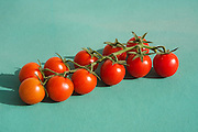Red Cherry Tomatoes on green background