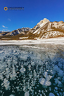 Methane ice bubbles under clear ice on Abraham Lake with Mount Abraham near Nordegg, Alberta, Canada