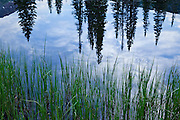 Trees reflect in a unamed pond near Lake Irwin outside of Crested Butte, Colorado.
