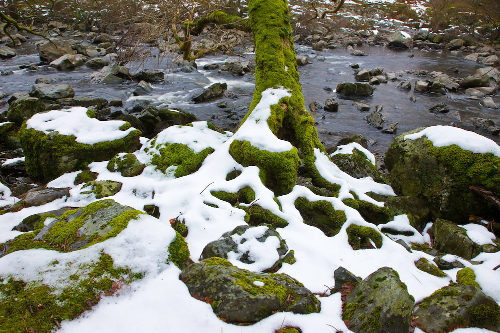 Oak Tree, River Elan, The Elan Valley, Rhayader, Mid-Wales, UK, ROBLE,  RIO ELAN, VALLE DE ELAN, RHAYADER, GALES MEDIO, REINO UNIDO