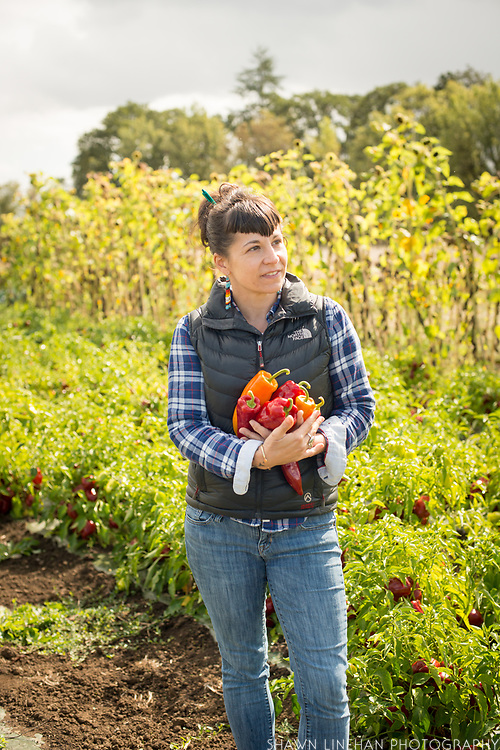 Lane Selman started the Culinary Breeding Network to help connect farmers, seed growers, and chefs.