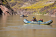 Private river runner in her  boat in her sixteen foot raft above bass camp. Brittle bush bloom in full bloom. For that postcard to Mom and Dad. River mile 107 +/-.