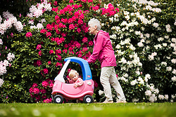 © Licensed to London News Pictures. 17/05/2016. Leeds UK. Margaret Davies pushes her one year old granddaughter Scarlet past the Rhododendron's at Temple Newsam park in Leeds as Yorkshire see's another fine weather day. Photo credit: Andrew McCaren/LNP
