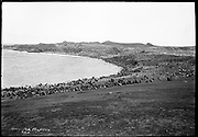 "9707-K201. written on original negative: ""Gorbatch Rookery""  St. Pauls Island. Pribilof Group. July 11, 1919"
