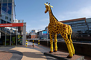 Lego giraffe outside Legoland on 30th March 2021 in Birmingham, United Kingdom. Lego A/S is a Danish toy production company based in Billund. It is best known for the manufacture of Lego-brand toys, consisting mostly of interlocking plastic bricks. The Lego Group has also built several amusement parks around the world, each known as Legoland, and operates numerous retail stores.
