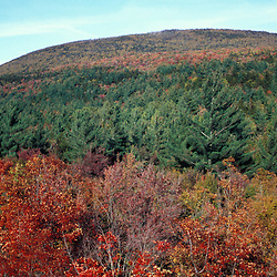 White Mountain N.F., NH. Pemigewasset Wilderness Area. Site of the old Camp 22 logging camp.  Early fall.