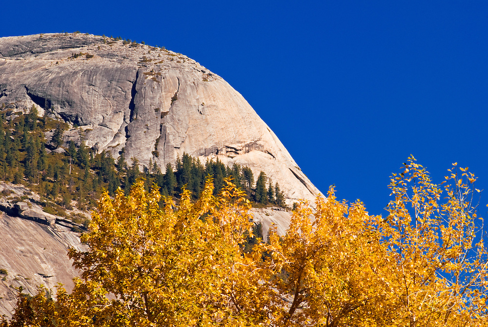 Fall color under North Dome, Yosemite Valley, Yosemite National Park, California