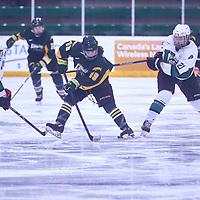 1st year forward, Sidney Shyiak (19) of the Regina Cougars during the Women's Hockey Away Game on Fri Jan 11 at University of Saskatoon. Credit: Arthur Ward/Arthur Images