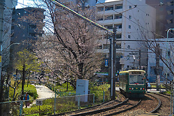 June 19, 2017 - Tokyo, Tokyo, China - Tokyo, Japan-April 2017: (EDITORIAL USE ONLY. CHINA OUT)..Sakura flowers blossom in Tokyo in April, 2017. (Credit Image: © SIPA Asia via ZUMA Wire)