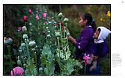 """Young Hands in Mexico Feed Growing U.S. Demand for Heroin."", The New York Times. El Calvario, Mexico, Aug. 29, 2015. Photographs by Rodrigo Cruz"