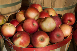 beautiful red apples in a container fresh from the farm