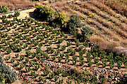 Israel, Golan Heights, fields and plantation