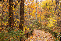 Autumn Colors in The Ramble of Central Park