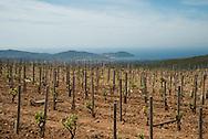 France. Bandol area, La begude vineyards