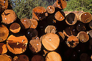 Tagged and stacked timber at mill site on the border of Redwood National Park, Humboldt County, California USA