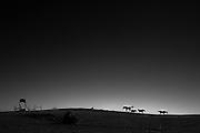 Patapsco Horse Farm, Oella, Maryland. Shot on A Fuji X-Pro 2.