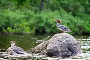Littleville Lake, Massachusetts