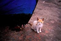 Maroc, Essaouira, Patrimoine mondial de l'UNESCO, chats des rues // Morocco, Medina of Essaouira, Atlantic coast, Unesco world heritage, street cat