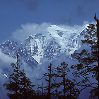 Conifers grow in the Kali Gandaki Gorge, below Nepal's Annapurna Massif.