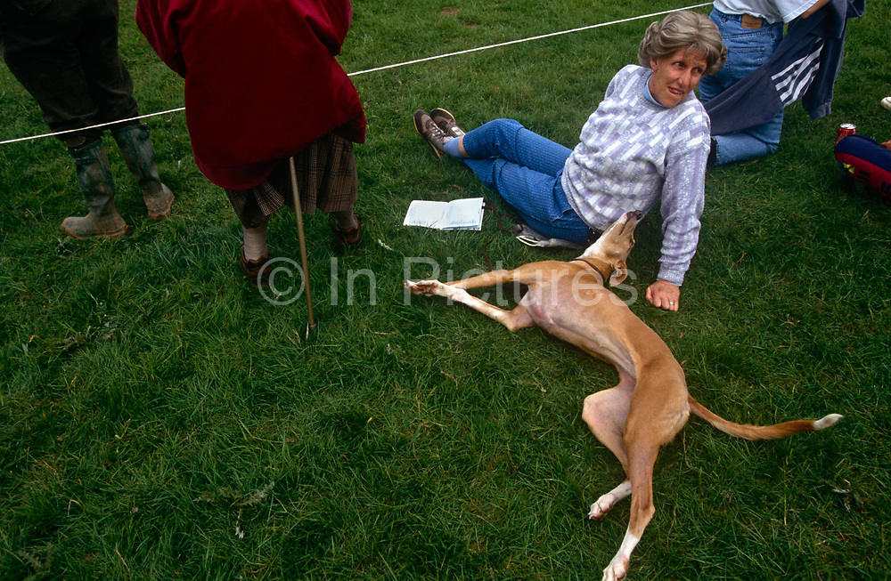 A spectator at the Royal Windsor horse trials, sita on the grass with her pet whippet dog, between competitors as they gallop across country in this west London space near Windsor Castle. The dog stretches out with tail wagging, its owners sat with an open competition listing. Alongside, an elderly lady rests on a shooting seat. Whippets in the UK are a medium-size dog averaging in weight from 15 to 30 lb (6.8–14 kg), with height (under the FCI standard) of 18.5 - 20 inches (47 - 51 cm) for males and 17.5–18.5 inches (44–47 cm) for females. Whippets are generally quiet and gentle dogs, and may be content to spend much of the day resting. After a chance to run about and let off steam, they are happy to become couch-potatoes. They are loyal and friendly. Because of this, whippets are known to have been used in aged care facilities.