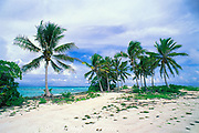 beach and coconut palms, Bikini Island, Bikini Atoll, Marshall Islands, Micronesia ( Pacific Ocean )