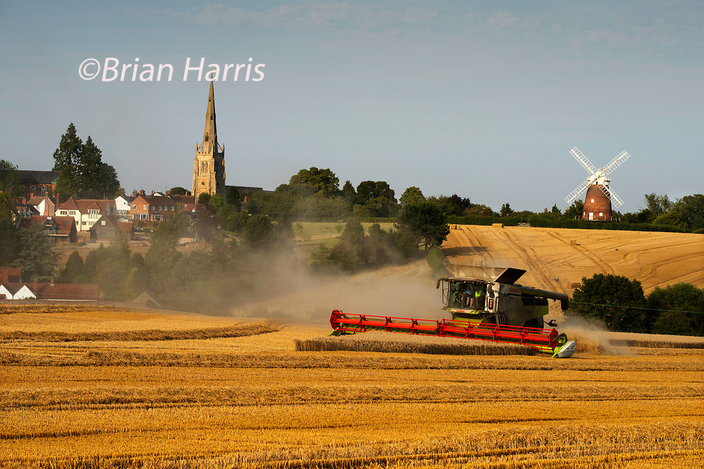 Thaxted Essex England UK. Wheat Harvest. 24 August 2019<br />Due to a wet begining of August the Wheat Harvest is running late this year but yields are expected to be high. Seen here a combine harvester cuts the wheat at Park Farm owned by farmer Simon Latham in the shadow of 15th century Thaxted Church and 19th century John Webb's Windmill in Thaxted north Essex England.