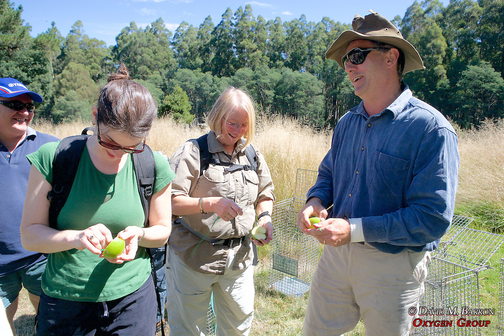 David Lindenmayer & Volunteers Setting Up Traps
