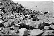 "9707-K205. written on original negative: ""Harem on Gorbatch. CLA""  St. Pauls Island. Pribilof Group. July 11, 1919"