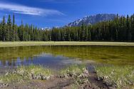 Small lake close to Elkwood camp ground, Peter Lougheed Provincial Park, Kananaskis