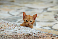 Grece, iles Ioniennes, Corfou, chat des rues // Greece, Ionian island, Corfu island, street cat